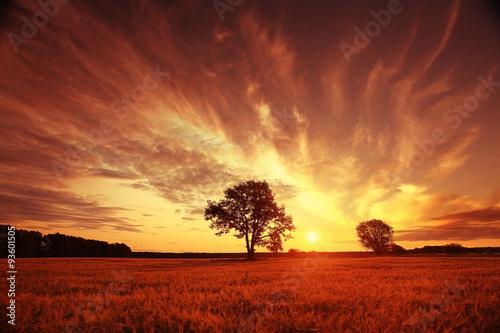 Foto auf Gartenposter Landschappen landscape fantastic sunset on the wheat field sunbeams glare
