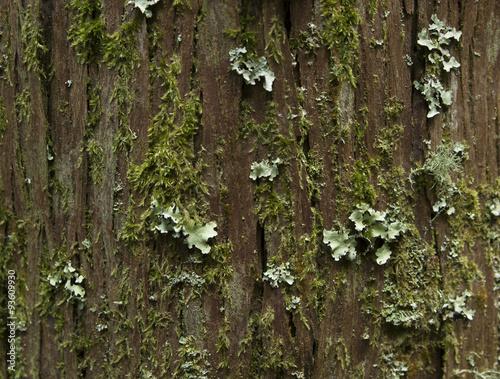 Fotografie, Obraz  Textura de árbol