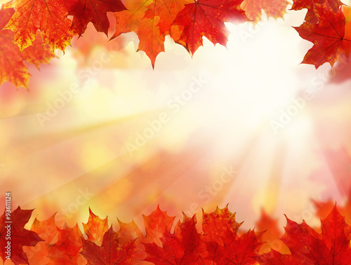 Fall Background with Autumn Maple Leaves - 93611124