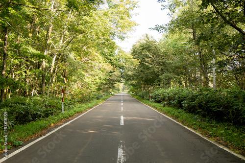 Tuinposter Weg in bos 森の中の道路