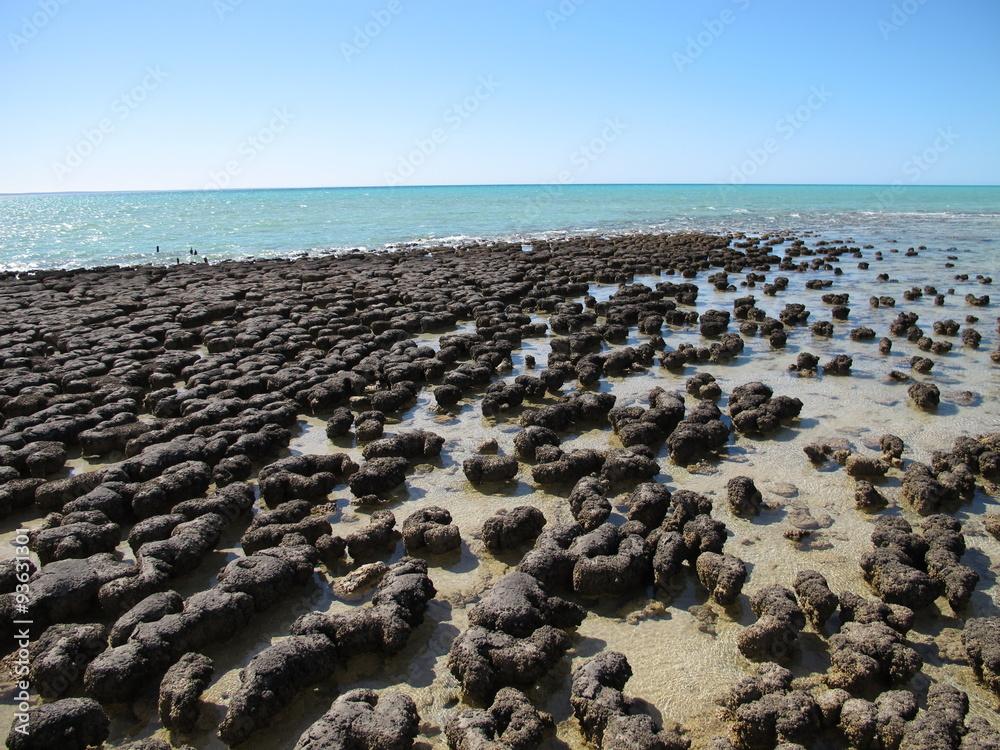 Láminas Los estromatolitos, Shark Bay, Australia Occidental ...