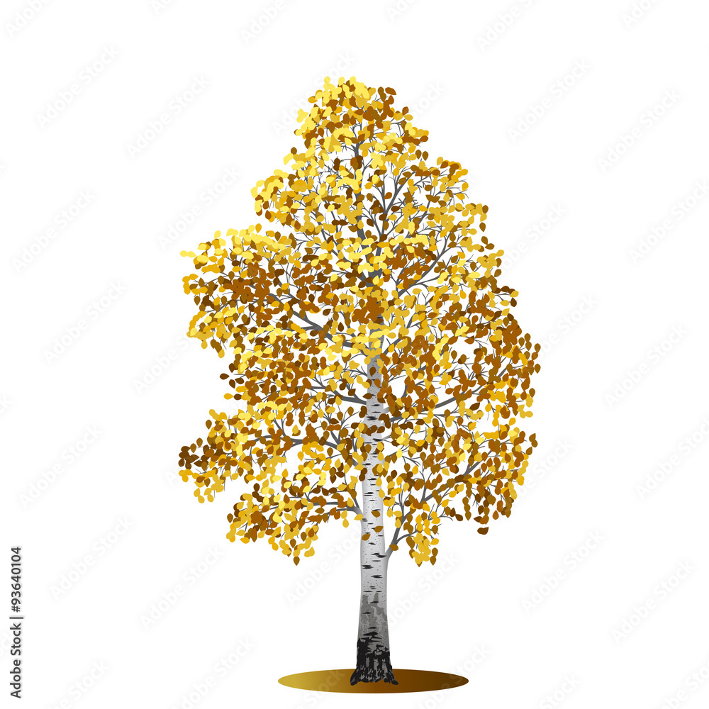 detached tree birch with yellow leaves