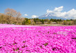 Leinwanddruck Bild - Mountain Fuji and pink moss field in spring season