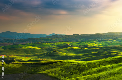 Canvas Prints Honey Tuscany spring, rolling hills on sunset. Rural landscape. Green