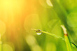 canvas print picture Morning grass