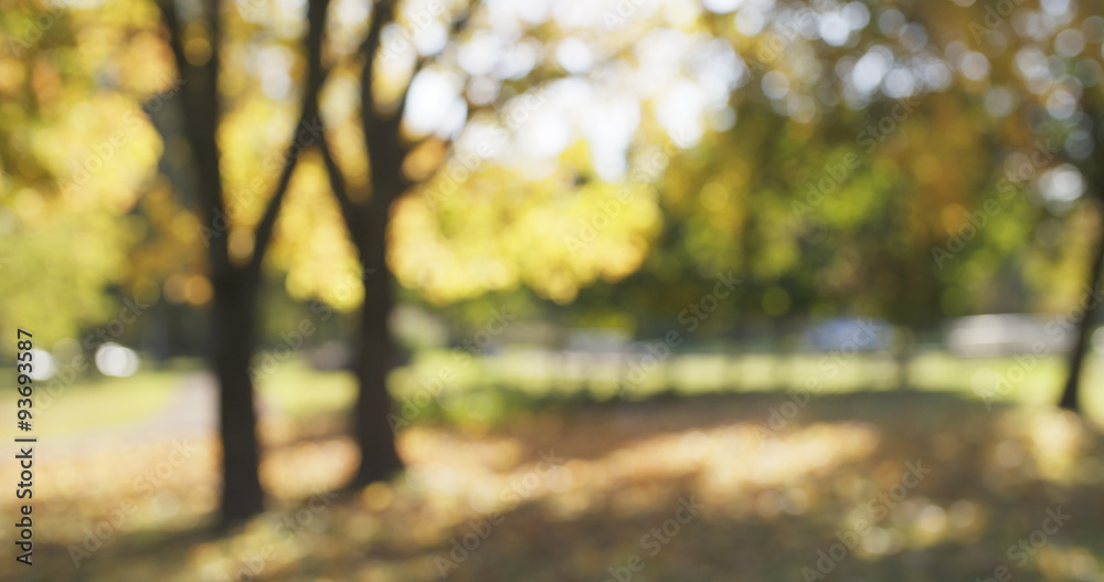 Fototapety, obrazy: blurred background of autumn park
