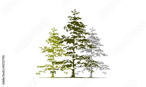Fotografiet  Cedar Tree