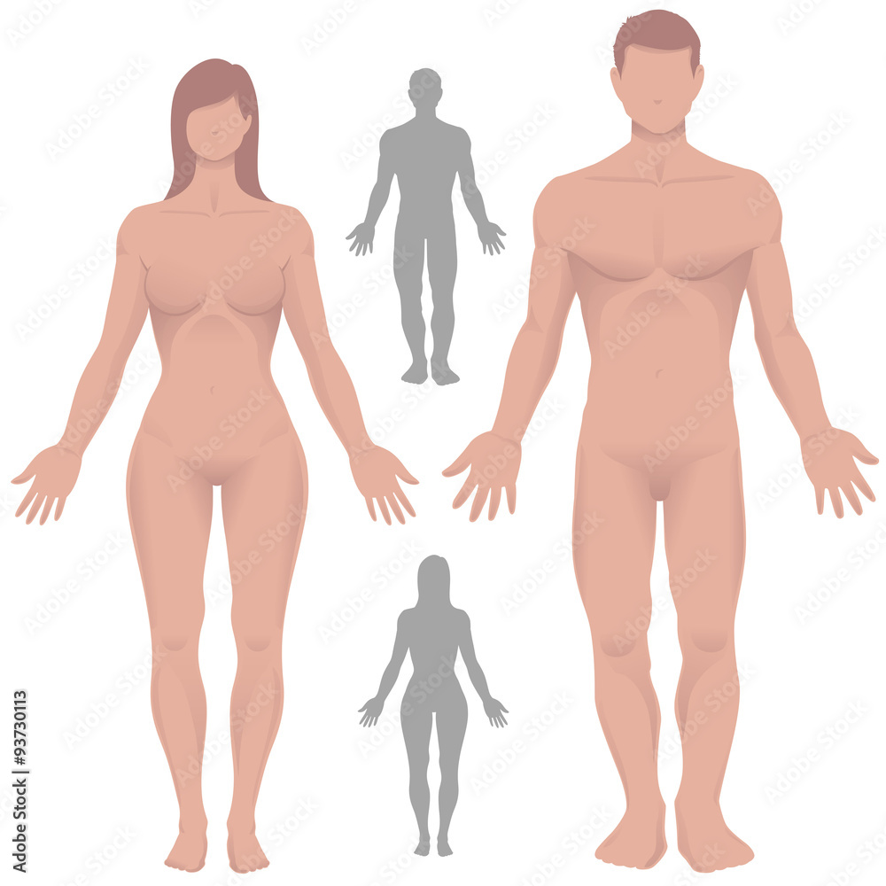 Male And Female Anatomy In Vector Foto Poster Wandbilder Bei