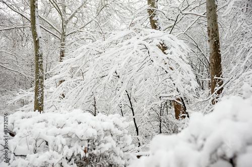 Fotografía  겨울세상