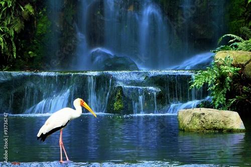 Photo  Yellow-billed Stork bird standing near waterfall