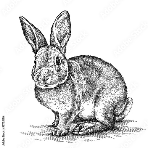 engrave rabbit illustration Wall mural