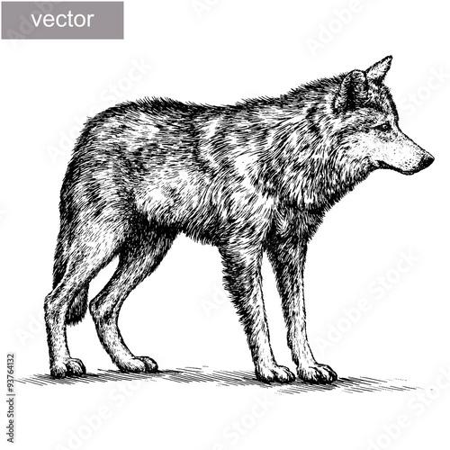 Fotografiet  engrave wolf illustration