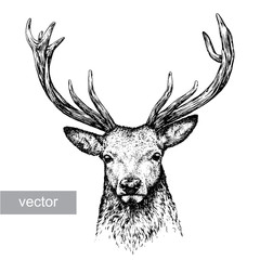 Fototapeta engrave deer illustration