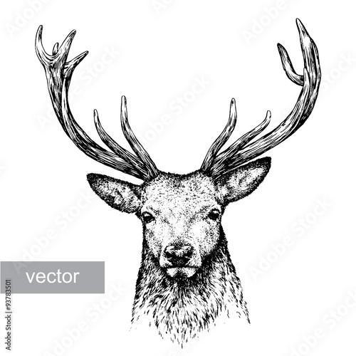Fotografie, Obraz  engrave deer illustration