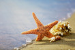 Starfish and coral on seascape background