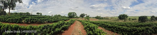 Photo  Young coffee plantation skyline landscape