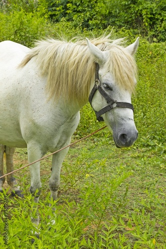 Fotografía  white Horse on grassland