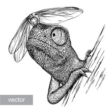 Engrave Chameleon Illustration