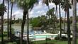 Swimming pool resort palm trees HD