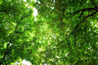 Leinwanddruck Bild - Green tree crown closeup