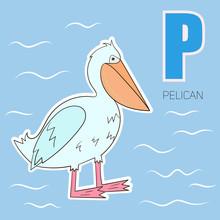 Alphabet Letter P Pelican Chil...