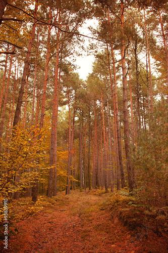 Herbst ©yvonneweis © Yvonne Weis