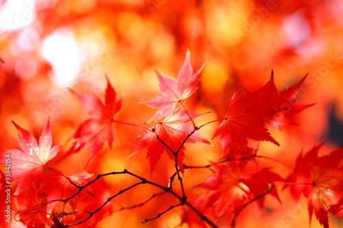 Poster de jardin Rouge 아름다운 가을의 모습