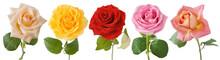 Rose Flowers Set Isolated On White Background