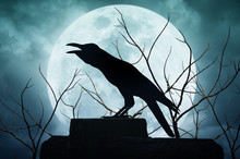 Crow Silhouetted Against Full Moon