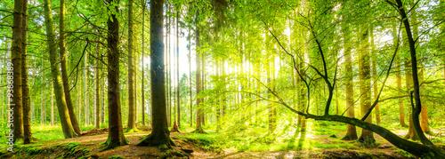 Wald Panorama mit Sonnenstrahlen Wallpaper Mural