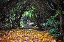 Autumn Path Through Tangled Rh...