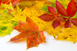 Herbst - Dekoration - Laub