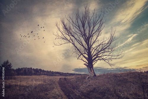 Photo  Gloomy autumn landscape in vintage processing