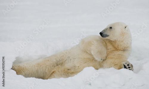 Foto op Plexiglas Arctica Polar bear lying in snow in the tundra. Canada. Churchill National Park. An excellent illustration.