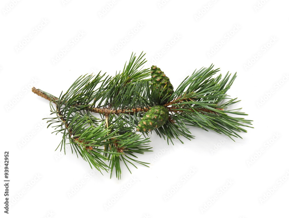 Fototapety, obrazy: pine branch with cone isolated on white background