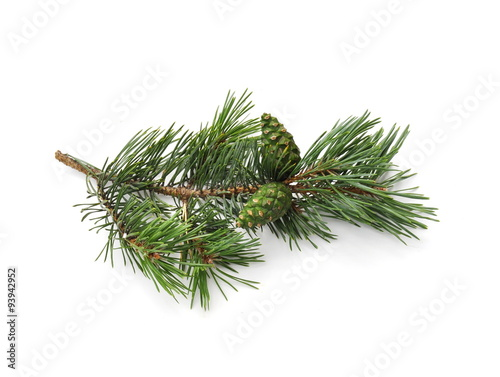 Fotografie, Obraz  pine branch with cone isolated on white background