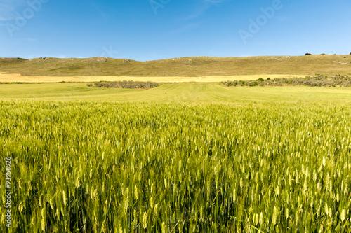Photo Puglia, campi di grano nel Parco Nazionale dell'Alta Murgia