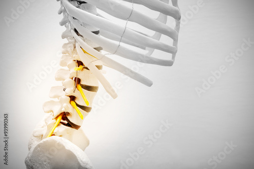 Fotografía  Lumbar model sceleton