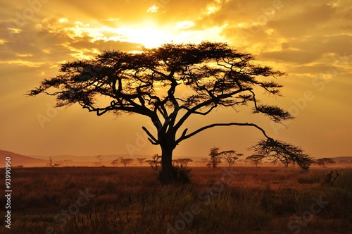 Staande foto Afrika Burning tree