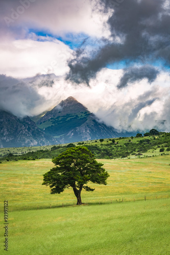 Lonely tree on background of mountains in Umbria, Italy Poster