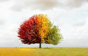 Baum im Verfärbten Blättern