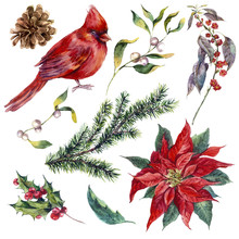 Set Vintage Watercolor Christmas Elements Of Holly, Poinsettia,