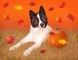 canvas print picture Dog In Field with Pumpkin and Fall Leaves
