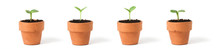 Four Tiny Seedlings In Terra C...