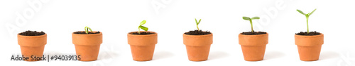 Fotografie, Obraz  A sequence of a seedling sprouting and growing in terra cotta pots - concept for