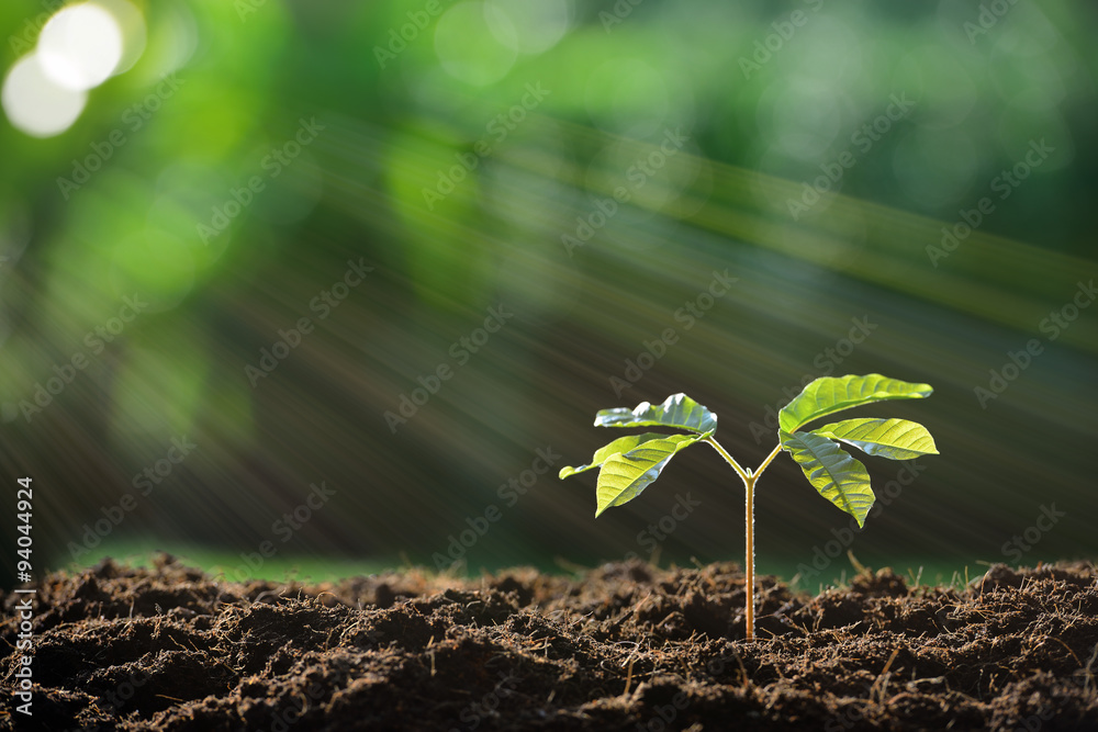 Fototapeta Young plant in the morning light on nature background