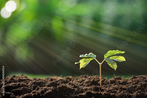 Poster Lente Young plant in the morning light on nature background