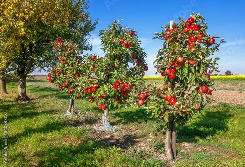 Apfelbäume Canvas Print
