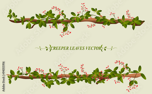 Foto Border of creeper flower vine plant