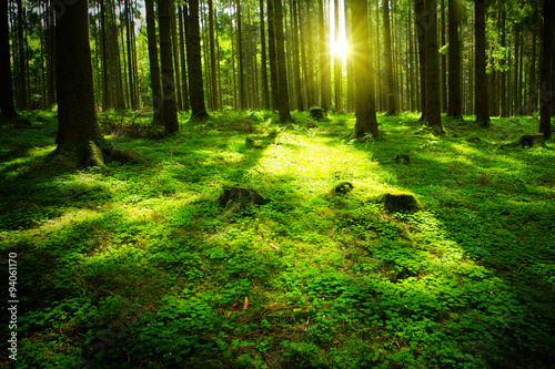 Wall Murals Forest Summer forest with sun and shadow